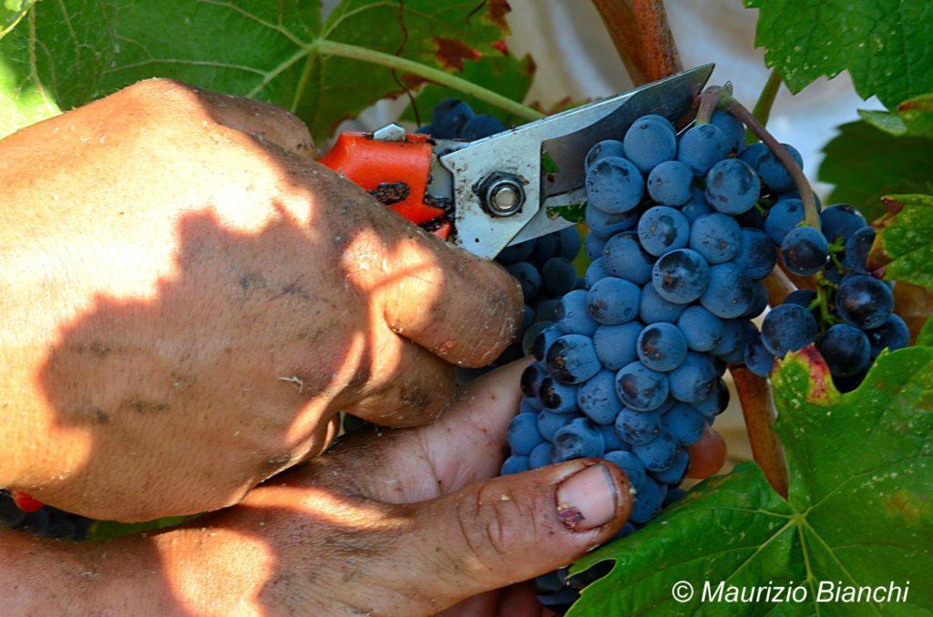 L'orgoglio dell'Oltrepò e una Vendemmia da sogno: Prime Alture Wine Resort