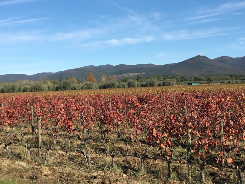 Visiting Tuscany #1 – Podere Sapaio, Bolgheri