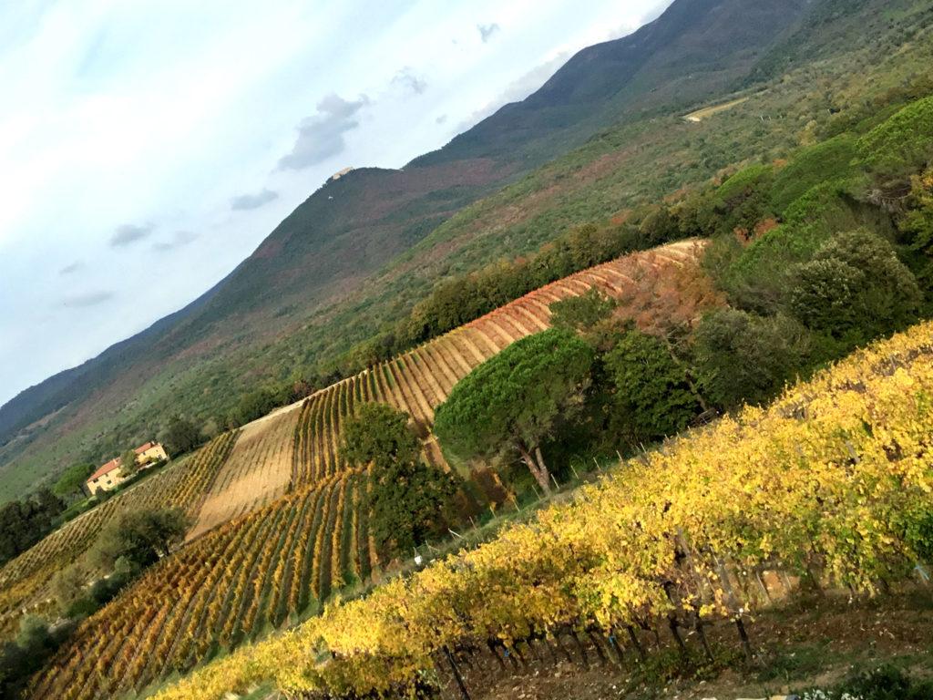 Viaggio in Toscana #2 – Tenuta Grattamacco, Bolgheri