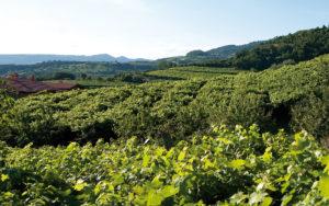 VinitalyTasting, Vinitaly, Vinitaly2019, Wine Princess, Vinitaly19, Cà D'Or, monti lessini, vini vulcanici