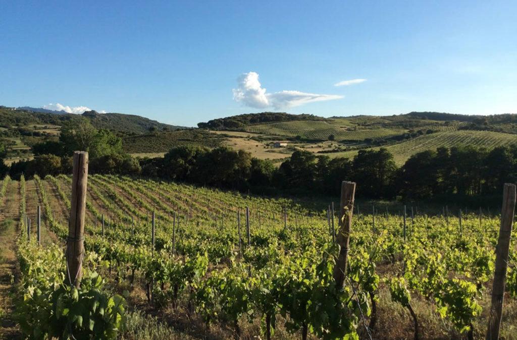 Pasqua in Sardegna alla scoperta della vendemmia tardiva