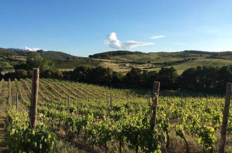 wine princess, cantina gallura, sardegna, vermentino tardivo, canayli, pasqua